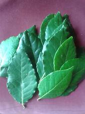 Hoja Laurel Ecologica. 40 Gramos FRESCO o 20 gr. SECO.