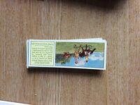 M12c Ty-phoo typhoo Tea card horses no 18
