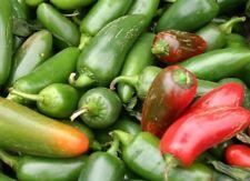 Tam Jalapeno Pepper Seed - Mildly Hot Salsa Peppers Seeds (0.25gr to 5.0gr)