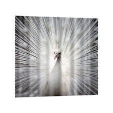 Bath Fabric Shower Curtain Extra Wide with Hooks Ring,Peacock,180 x 180cm