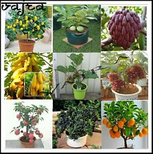 Super Combo Pack 9 Variety Mixed Bonsai Fruits Seeds Big Combo 50 Seeds Packet