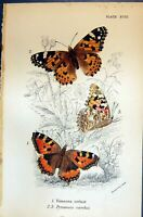 Old Allen Nature Kirby Butterflies 1894 Vanessa Urticoe Pyrameis Card Victorian