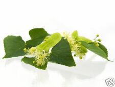 Natural Soothing & Antiseptic Tea Tree And Manuka Body Cream Anti-Septic 50 ml