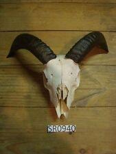 Ram skull outdoors wildlife hill country rustic decor Sr0940