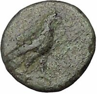 Kyme in Aeolis 350BC EAGLE & VASE on Authentic Ancient Greek Coin i48070