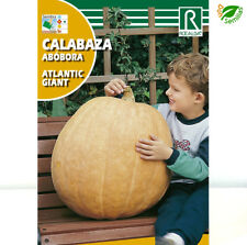 Calabaza ATLANTIC GIANT ( 5 gr / 20 semillas aprox ) seeds - gigante
