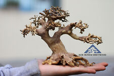 Aquarium Bonsai Driftwood Moss Small Tree Shrimp Nano Planted Tank - Bulk M1
