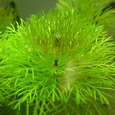 Garden Mixed Pet Fish Aquarium Grass Seeds Water Aquatic Plant Seeds 1000pcs