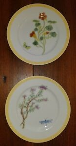 """Williams Sonoma """"FLOWERING HERBS"""" Pattern Pair of Yellow Rimmed Salad Plates"""