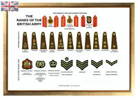Large A3 Ranks of the British Army Poster ( Military recruit rank structure