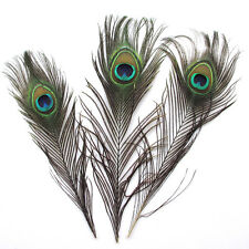 20pcs Peacock Tail Feathers Natural 25-30cm Long / Craft Bouquet DIY Decor
