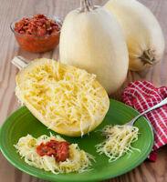 Seeds Zucchini Courgette Squash Spaghetti Vegetable Organic Heirloom Ukraine