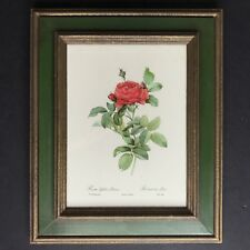 Rosa Gallica Pontiana PJ Redoute Roses Botanical Print Vtg Framed Victorius