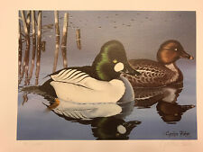 1988 Ohio Duck Stamp Print With Stamp By Cynthie Fisher