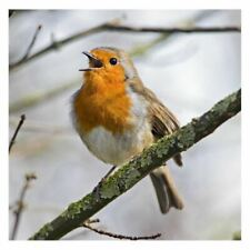 Robin Sound Card - plays beautiful birdsong when opened!