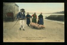 Animal postcard pig costumes rooting for truffles France Vintage