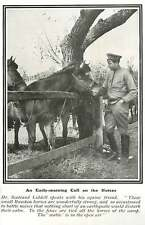 WW1 Small Russian Horses Wonderfully Strong And Calm In Open-air Stable