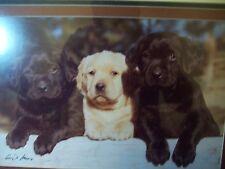 Gerry Lamarre Signed Photograph Labrador Retriever`s Puppies