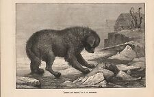 1873 ART - EREBUS AND TERROR BY J W BOTTOMLEY - DOGS