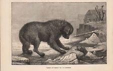 1873 Art-antárticas y terror por J W inaugurar-Perros