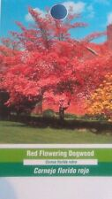 Red Flowering Dogwood Tree Grow Own Trees Plants Landscape Shade Fruit Flowers