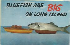 Bluefish Are Big on Long Island Giant Fish Comic Postcard 1950s