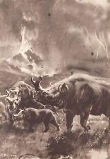 "Prehistoric N American BRONTOTHERIUM Sepia Print By Z Burian 1963 VF Clean 9x13"""