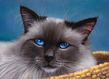 Original Pastel Painting Sacred Birman Cat Art Artist A.C. GRIEHL-GROSS