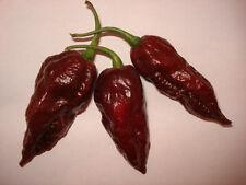 Bhut Jolokia Chocolate 5 Samen Chili Chilisamen - Extrem scharfe Chilisorte