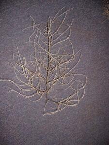 Authentic Arizona Tumbleweeds