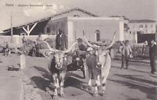 6923) SIENA, STAZIONE FERROVIARIA SCALO, CARRI CON BUOI TRASPORTO MERCI. VG.