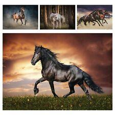 Fototapete Pferde Wohnzimmer Natur Tiere Galopp Wiese Himmel Landschaft XXL