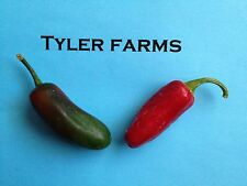 30+ Billy Biker Jalapeno Seeds (organic chili, chile) Hot and Giant for Salsa