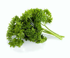 Parsley Seeds, Moss Curled, Heirloom Herbs, Non-Gmo Spice, Indoors or Out, 100ct