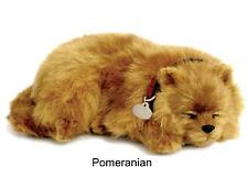 Pomeranian- Il cucciolo che respira - PERFECT PETZZZ