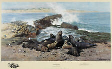 "DAVID SHEPHERD. ""ELEPHANT SEALS"". SIGNED LIMITED EDITION PRINT"