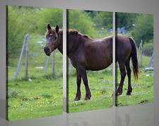 Quadri moderni stampe su tela ALLO STATO BRADO canvas cavalli cavallo 130x90