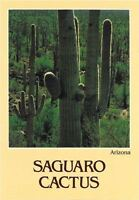 Family Group of Saguaros State Flower of Arizona.