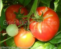 🔥 🍅 Bonnys Best Tomate * eine der besten Tomaten * 10 Samen