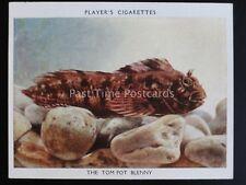 No.3 THE TOM POT BLENNY - Aquarium Studies L25 by John Player 1932