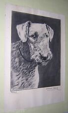 CIRCA 1930. AIREDALE TERRIER PRINT. FRANKLIN. 15 x 11 INCHES