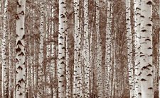 Birch Tree Forest (Sepia) 12' x 8' (3,66m x 2,44m)-Wall Mural