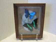 Morpho BLUE & Papilio Blumei GREEN BUTTERFLIES 3D FERN WOOD SHADOW BOX Signed