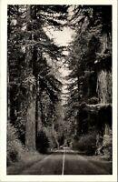Vtg 1920's Avenue of the Giant Redwood Empire Trees California CA Postcard g5385