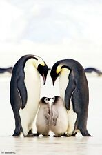 EMPEROR PENGUINS POSTER 22x34 - CUTE NATURE FAMILY 15550