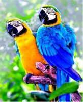 DIY 5D Two Parrots Diamond Painting Full Drill Home Decor Cross Stitch Kit Gift