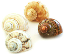 Set of 4 Deluxe Hermit Crab Changing Shell Set Medium/Large Select Turbo +