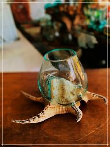 Betta Fish Tank Made from Molten Glass On Lambis Spider Shell - Best for Decor