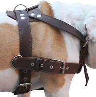 Genuine Leather Dog Harness for Walks Pulling and Training XL Breeds Heavy Duty