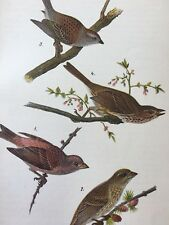 1890 Antique Bird Print Purple Finch Chipping Song Sparrow on Branches